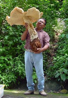 Огромный гриб