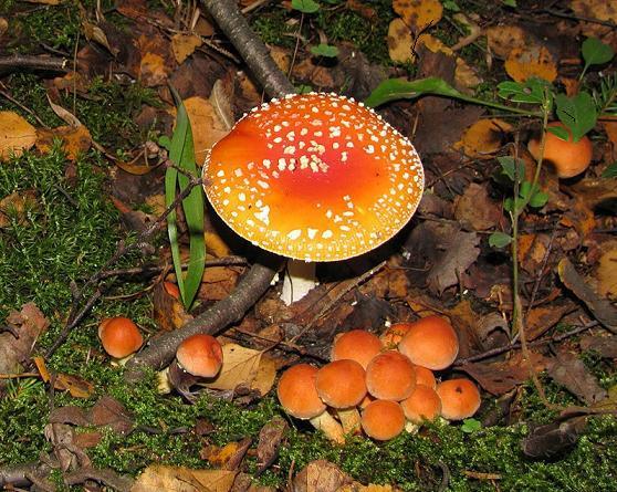 Сроки плодоношения или как искать грибы