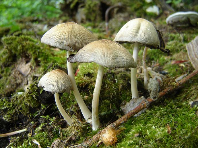 Отравление грибами и первая помощь пострадавшим