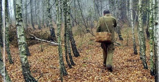 Как вести себя в лесу