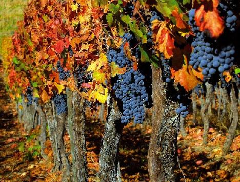 Осенние плодовые деревья